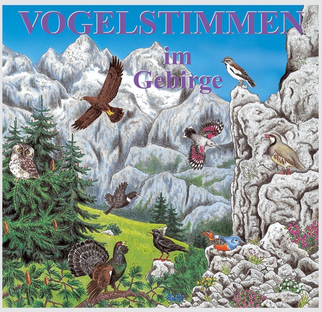 Vogelstimmen 7 im Gebirge. CD - zum Schließen ins Bild klicken