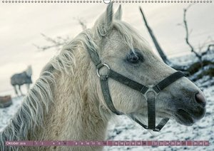 Pferde - kraftvolle Eleganz