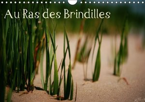 Au Ras des Brindilles (Calendrier mural 2015 DIN A4 horizontal)