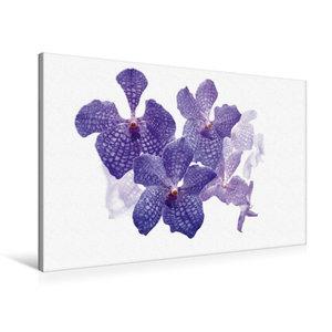 Premium Textil-Leinwand 90 cm x 60 cm quer Vanda coerulea Orchid