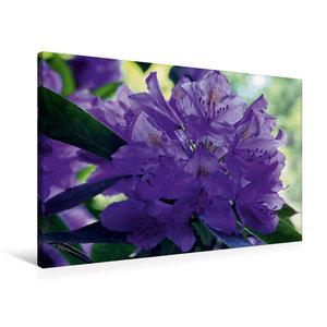 Premium Textil-Leinwand 90 cm x 60 cm quer Lilaner Rhododendron
