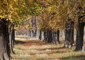 Autumn Meditation (Poster Book DIN A4 Landscape)