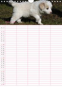 Border Collie Welpen - Familienplaner (Wandkalender 2019 DIN A4