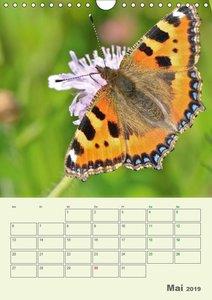 Schmetterlinge - fliegende Schönheiten (Wandkalender 2019 DIN A4