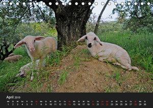 Nutztiere als Landschaftspfleger (Tischkalender 2019 DIN A5 quer