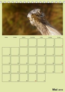 Coole und schräge Vögel (Tischkalender 2019 DIN A5 hoch)