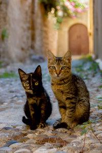 Premium Textil-Leinwand 50 cm x 75 cm hoch Katzenkinder in einer