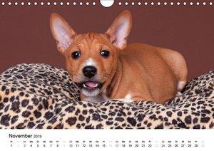Bezaubernde Basenji-Welpen (Wandkalender 2019 DIN A4 quer)