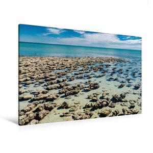 Premium Textil-Leinwand 120 cm x 80 cm quer Stromatolithen