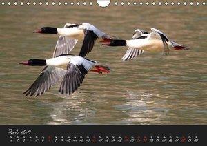Tiere in Bewegung (Wandkalender 2019 DIN A4 quer)