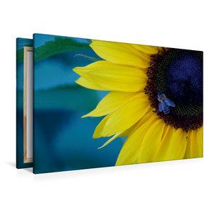 Premium Textil-Leinwand 120 cm x 80 cm quer Honigbiene auf Sonne