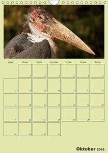 Coole und schräge Vögel (Wandkalender 2019 DIN A4 hoch)