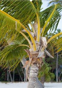 Unter Palmen (Posterbuch DIN A3 hoch)