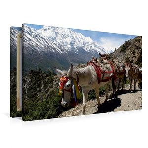 Premium Textil-Leinwand 90 cm x 60 cm quer Pferde sind noch imme