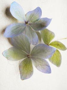 Zarte Hortensienblüten in Pastell 1000 Teile Puzzle hoch