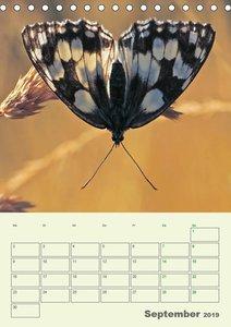 Schmetterlinge - fliegende Schönheiten (Tischkalender 2019 DIN A