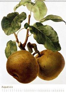 Obstbäume: Botanische Zeichnungen und historische Stiche