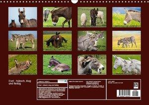 Esel - hübsch, klug und fleißig (Wandkalender 2019 DIN A3 quer)