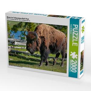 Bison im Yellowstone Nat\'l Park 2000 Teile Puzzle quer