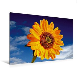 Premium Textil-Leinwand 120 cm x 80 cm quer Sonnenblume Sonja-He
