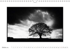 Emotionale Momente: Black & White Fineart - die Eiche.