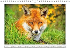 Der Fuchs: scheues Wildtier