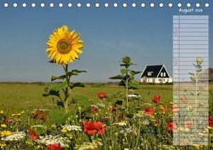 Ein Sommer auf Texel