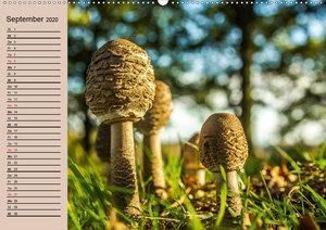 Pilze und Pilzgerichte (Wandkalender 2020 DIN A2 quer)