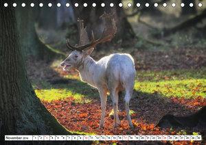 Jahreszeiten im Tiergarten Hannover (Tischkalender 2019 DIN A5 q