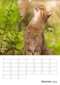 Europäische Wildkatzen - Jahresplaner