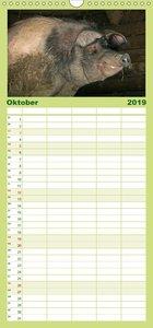 Schweinereien - Familienplaner hoch (Wandkalender 2019 , 21 cm x