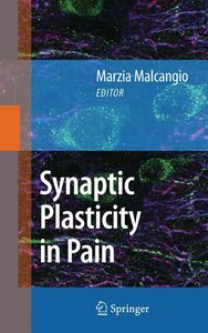 Synaptic Plasticity in Pain