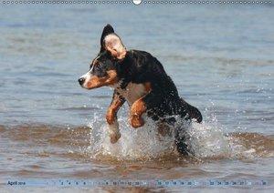 Schwimmen mit Hunden - Ein Spaß für Mensch und Hund