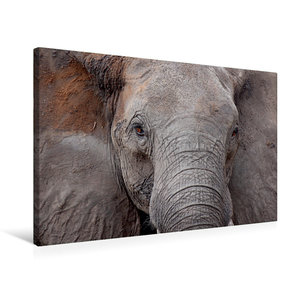 Premium Textil-Leinwand 75 cm x 50 cm quer Kasane Forest Reserve