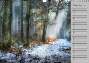 Planungskalender Märchenwald 2019 (Wandkalender 2019 DIN A3 quer