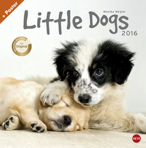Wegler Little Dogs Broschurkalender 2016