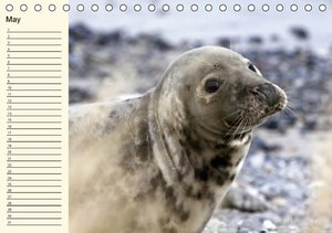The Seals / UK-Version / Birthday Calendar (Table Calendar perpe