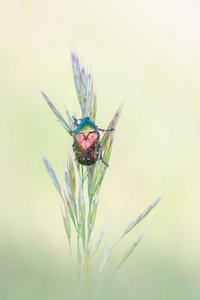 Premium Textil-Leinwand 50 cm x 75 cm hoch farbenprächtige Insek