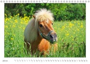 Der Pferdekalender (Wandkalender 2019 DIN A4 quer)