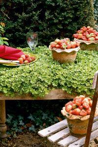 Premium Textil-Leinwand 80 cm x 120 cm hoch Erdbeerzeit