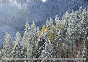 Wälderweit - Unterwegs im Wald I (Wandkalender 2019 DIN A3 quer)