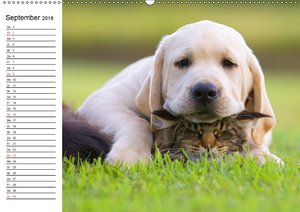 Hund, Fuchs und Co. Reizende Freunde
