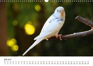 Wellensittiche - der NEUE Kalender (Wandkalender 2019 DIN A3 que