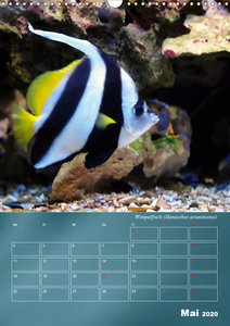 Riffbewohner - Bunte Fische, Anemonen und noch viel mehr (AT-Ver