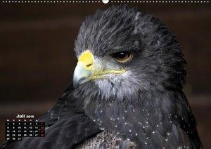 Greifvögel, Eulen und Käuze (Wandkalender 2019 DIN A2 quer)