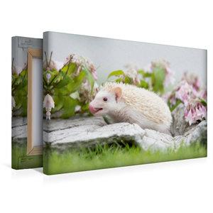 Premium Textil-Leinwand 45 cm x 30 cm quer Afrikanischer Weißbau