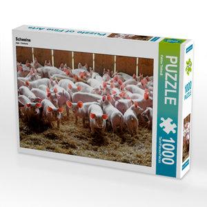 CALVENDO Puzzle Schweine 1000 Teile Lege-Größe 64 x 48 cm Foto-P
