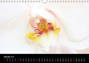 Traumblüten (Wandkalender 2019 DIN A4 quer)
