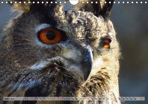 Majestätische Greifvögel (Wandkalender 2019 DIN A4 quer)