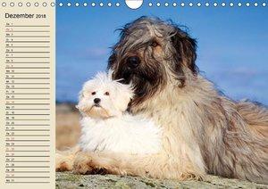 Beste Freunde. Bezaubernde Tierfreundschaften